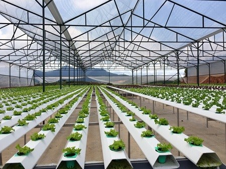 Farming sector must reform to attract FDI hinh anh 1