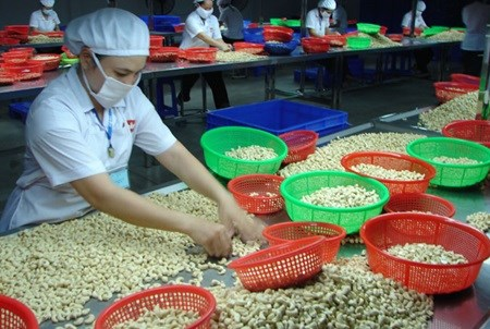 West African delegation looks to study Binh Phuoc's cashew sector hinh anh 1
