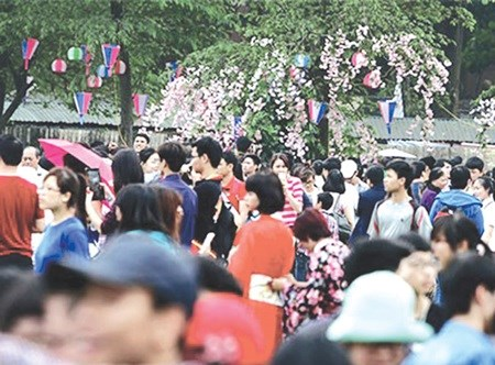Japanese cherry trees to bloom in Hanoi hinh anh 1