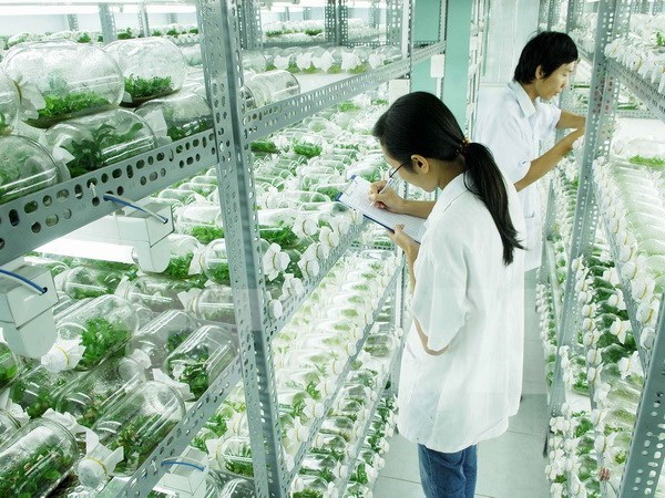Vietnam, Japan discuss support for businesses in technology transfer hinh anh 1