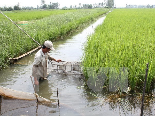 Ca Mau plans drought, saltwater intrusion prevention in dry season hinh anh 1