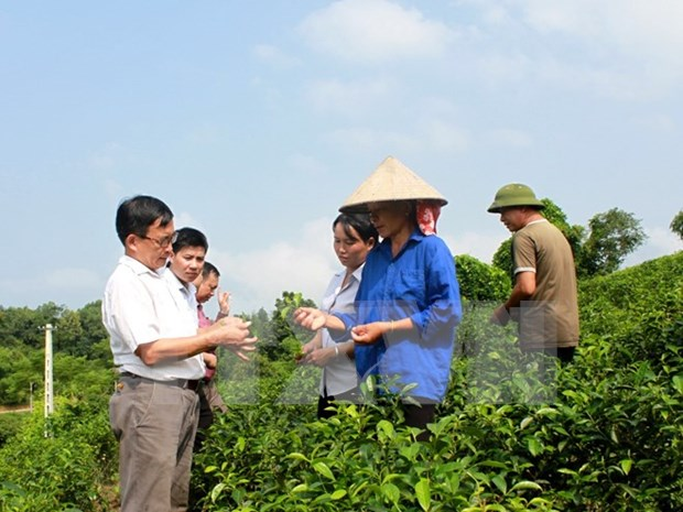 New-style cooperatives play key role in agricultural restructuring hinh anh 1