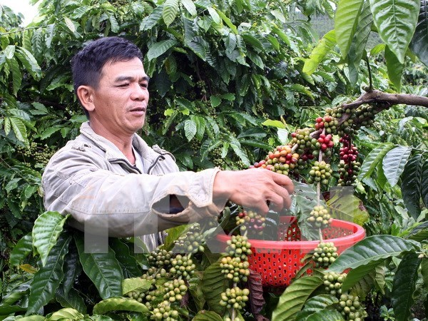 Vietnam's instant coffee exports on upswing hinh anh 1