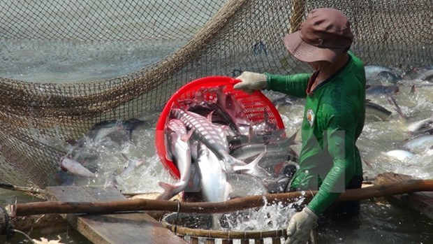 Vietnam disappointed about US's inspection on tra, basa fish hinh anh 1