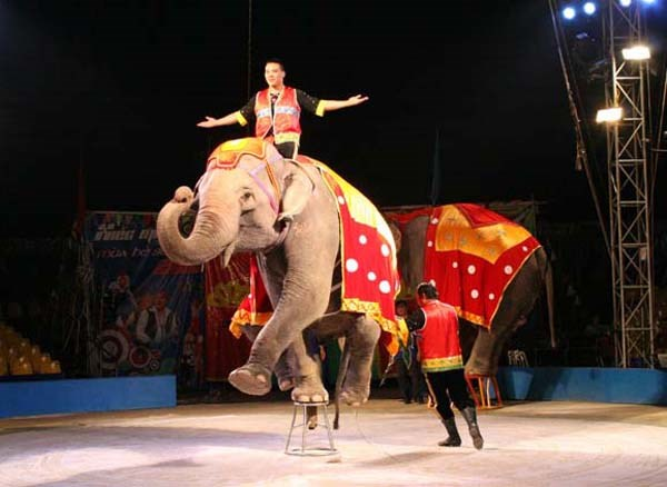 200 performers to compete in Vietnam-Laos-Cambodia circus contest hinh anh 1
