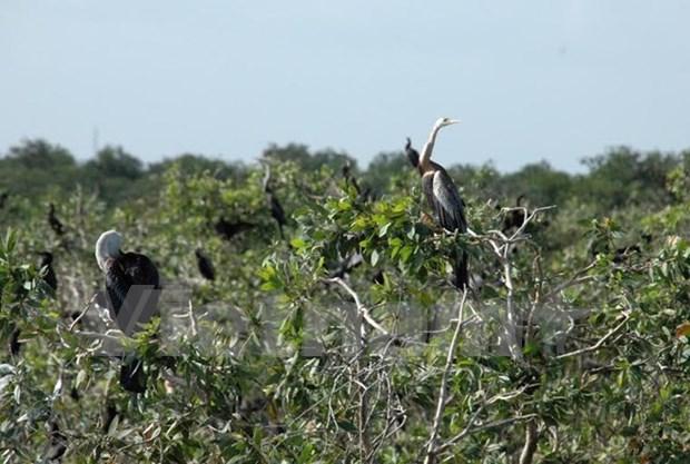 Cambodia has 4th Ramsar site hinh anh 1