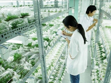 Hi-tech zones aim to improve farming sector hinh anh 1