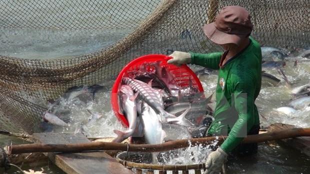 Vietnam strives to ensure smooth export of tra, basa fish hinh anh 1