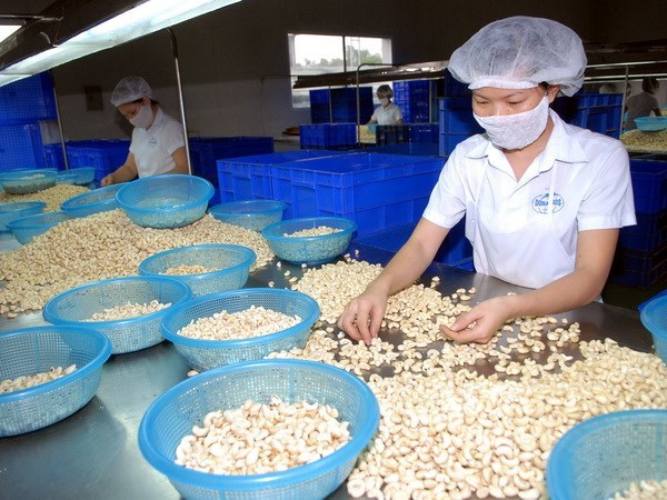 Cashew export revenue in 11 months surges over 19 percent hinh anh 1