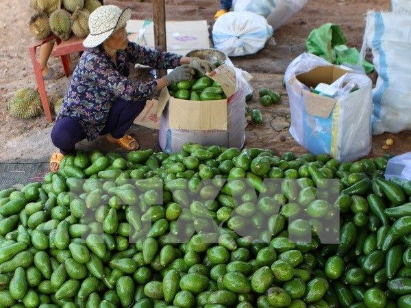 Supply chains key to farmers' incomes hinh anh 1