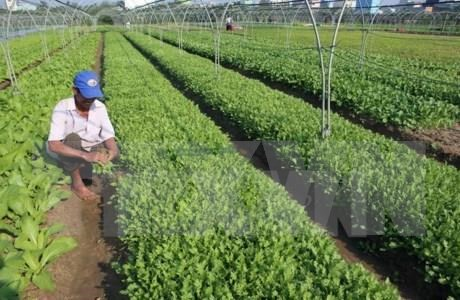 Quang Ninh invites investment in agriculture hinh anh 1