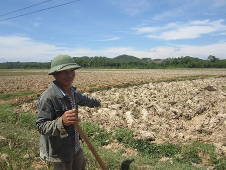 Drought hits Vietnam's southern localities hinh anh 1