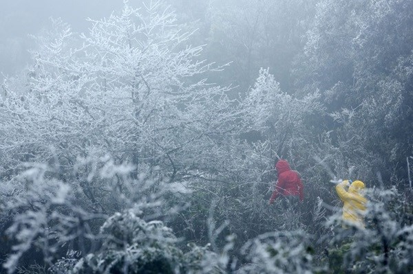 Hoarfrost appears in northern Vietnam hinh anh 1