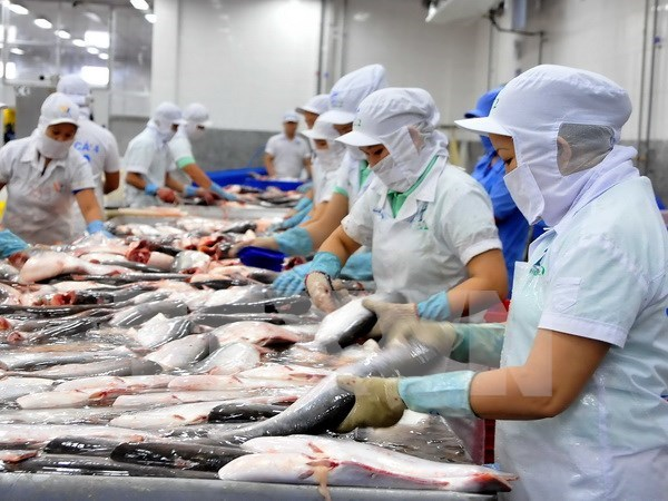 Social responsibility practice to promote fisheries sector's standing hinh anh 1