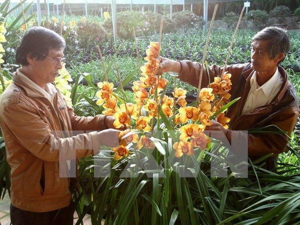 Da Lat Flower Festival: 126 flower growers honoured hinh anh 1