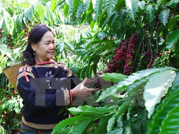 Central Highlands grows despite difficulties hinh anh 1
