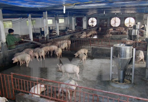 Hanoi shifts to animal husbandry, agricultural services hinh anh 1