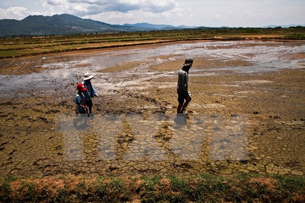 El Nino impacts to linger in first half of 2016 hinh anh 1