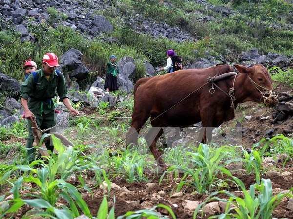 Central Highlands strives for sustainable poverty reduction hinh anh 1