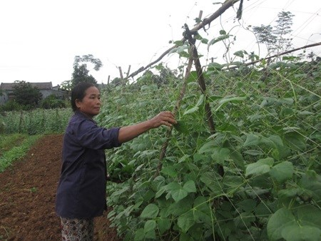 Farmers face obstacles selling organic foods hinh anh 1