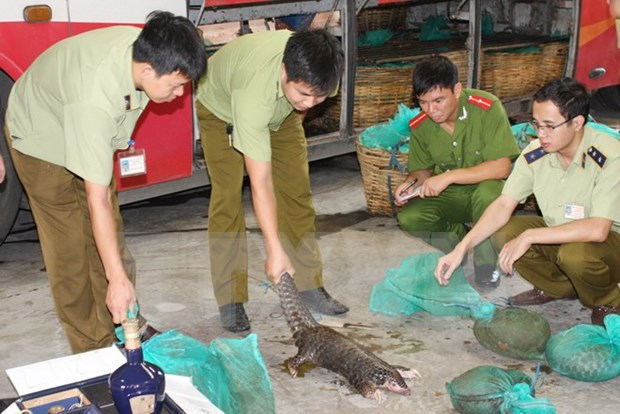 ENV declares war on pangolin crime hinh anh 1