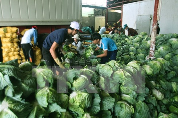 Hanoi to export agricultural products to Japan, Malaysia hinh anh 1