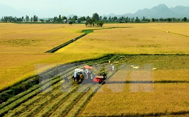 Belgian friends hail Vietnam's socio-economic achievements hinh anh 1