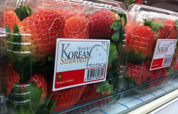 RoK fresh strawberry to be exported to Vietnam hinh anh 1