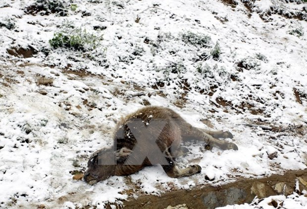 Cold spell takes heavy toll on northern Vietnam hinh anh 1
