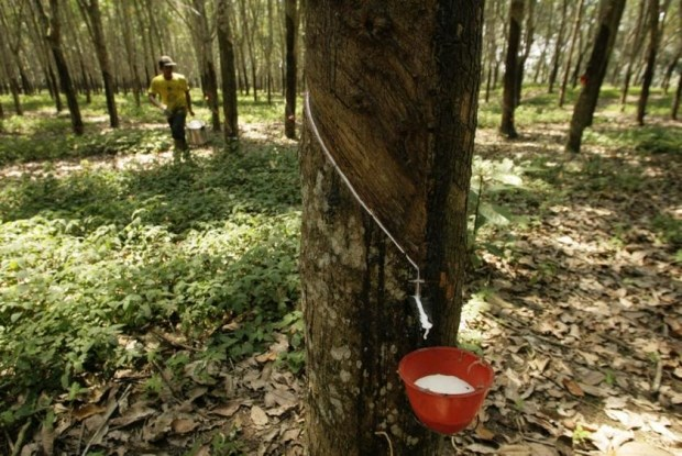 Thailand, Indonesia, Malaysia to cut rubber exports hinh anh 1