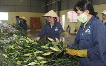 Flower industry needs tech growth hinh anh 1