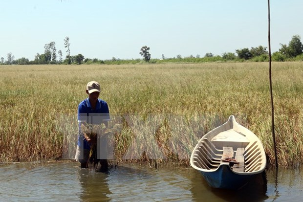 Mekong Delta: Salt intrusion a once-in-a-century disaster hinh anh 2