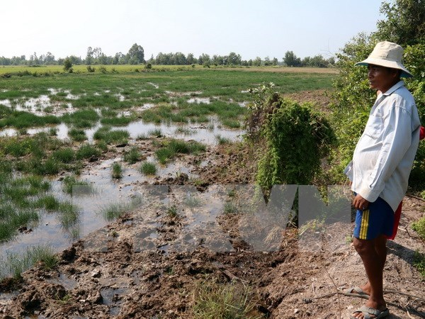 Mekong Delta provinces tackle saltwater intrusion hinh anh 1