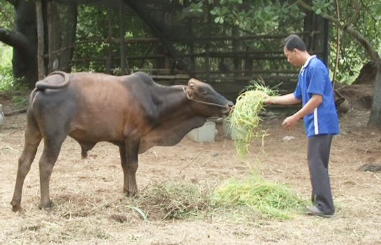 Fund helps farmers improve lives hinh anh 1