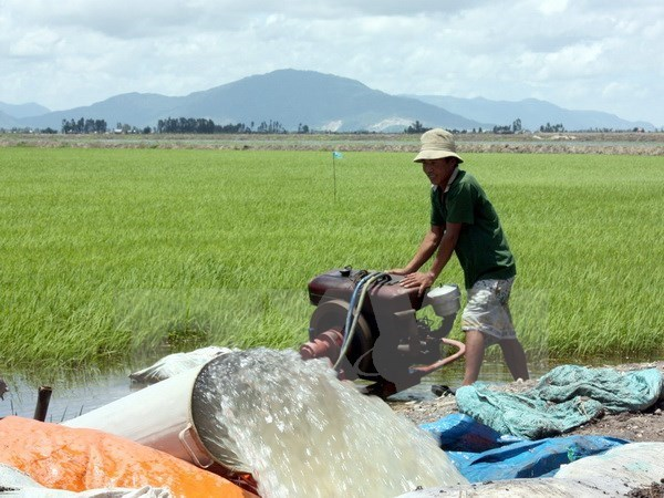 Paddy, rice prices on the rise amid severe saltwater intrusion hinh anh 1