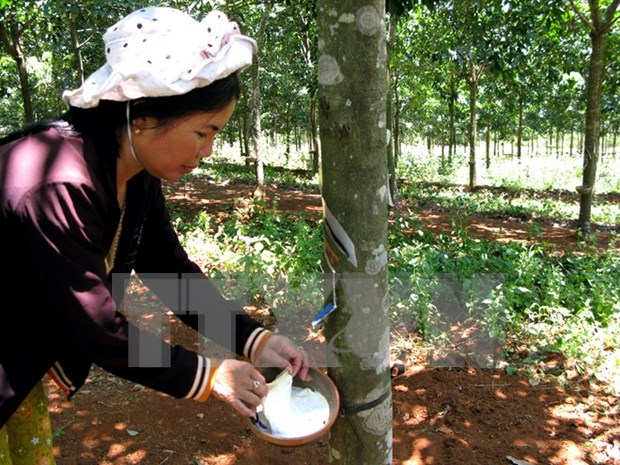 Indonesia's rubber output to drop slightly hinh anh 1
