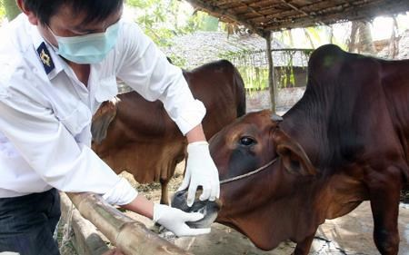 Localities asked to allocate funds for foot and mouth disease control hinh anh 1