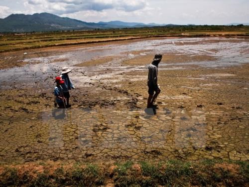 Proper irrigation helps Mekong Delta cope with water crisis hinh anh 1