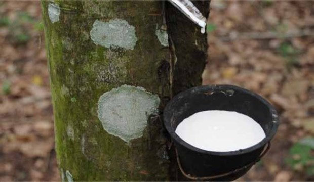 Indonesia cuts natural rubber exports hinh anh 1