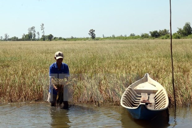 Tien Giang: Over 110,000 ha of crops threatened by saltwater intrusion hinh anh 1