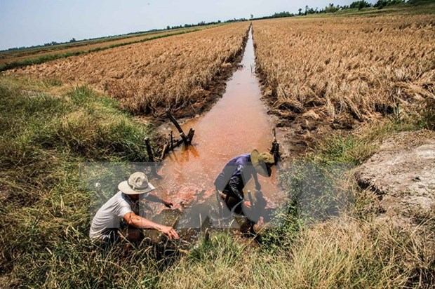 11 provinces announce drought, saltwater intrusion emergency hinh anh 1