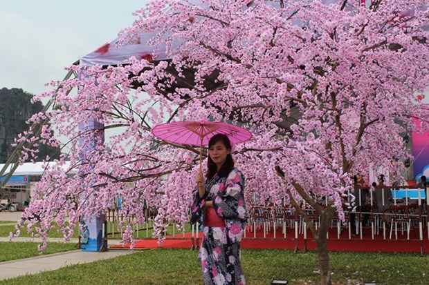 Cherry blossom events come to Vietnam hinh anh 1
