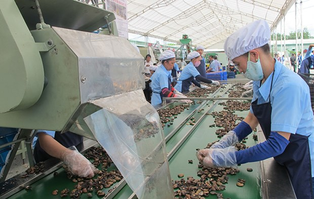 Cashew prices reach highest in a decade hinh anh 1