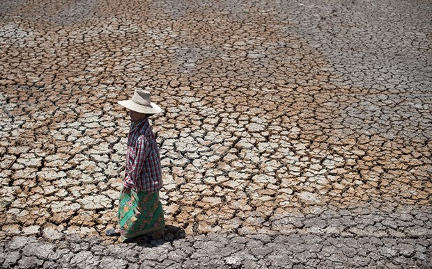 Thailand: drought might cut 0.8 pct of GDP hinh anh 1