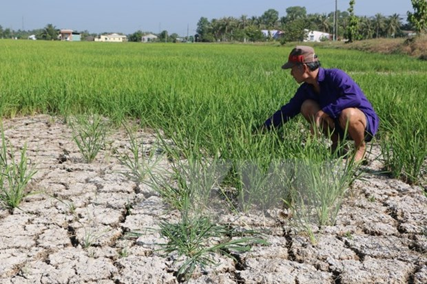 Adaptation to saltwater intrusion critical to Mekong Delta hinh anh 1