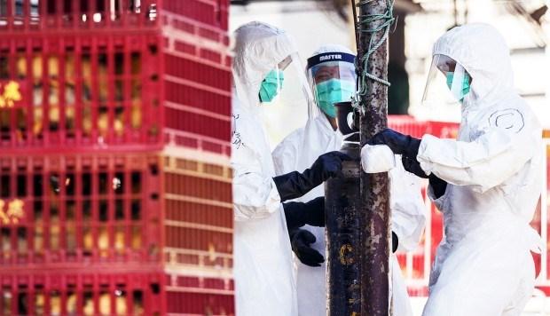 Malaysia, Thailand conduct anti-bird flu drill hinh anh 1