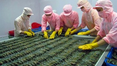 Prawn export sees increase in first quarter hinh anh 1