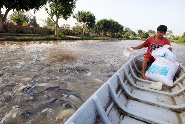 Tra fish production shifts towards sustainable supply chain hinh anh 1