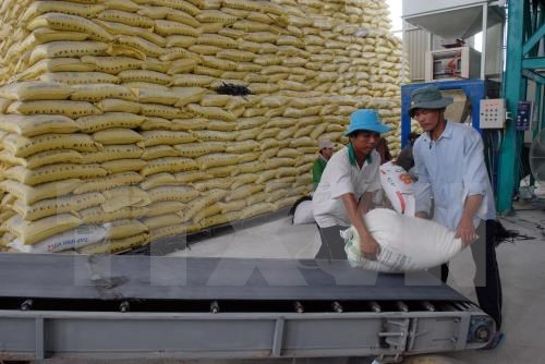 Advanced post-harvest rice technologies introduced hinh anh 1