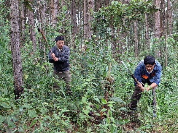 JICA-funded project to help develop sustainable forest in northwest hinh anh 1